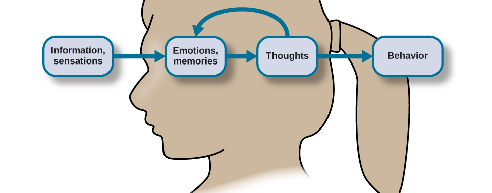 """The outline of a human head is shown. There is a box containing """"Information, sensations"""" in front of the head. An arrow from this box points to another box containing """"Emotions, memories"""" located where the front of the person's brain would be. An arrow from this second box points to a third box containing """"Thoughts"""" located where the back of the person's brain would be. There are two arrows coming from """"Thoughts."""" One arrow points back to the second box, """"Emotions, memories,"""" and the other arrow points to a fourth box, """"Behavior."""""""