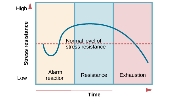 "A graph shows the three stages of Selye's general adaption syndrome: alarm reaction, resistance, and exhaustion. The x-axis represents time while the y-axis represents stress levels. The x-axis is labeled ""Time"" and the y-axis is labeled ""Stress resistance."" The graph shows that an increase in time and stress ultimately leads to exhaustion."
