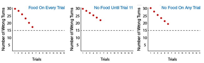 3 graphs depicting the three groups in Tolman's experiment: Group 1: food on every trial, Group 2: no food until trial 11, and Group 3: no food on any trial. There is a dotted horizontal line on each graph at number of wrong turns equal to 15. Group one shows the number of wrong turns decreasing with each additional trial down to 16 wrong turns on the sixth trial. Group two shows the number of wrong turns decreasing with each additional trial down to 21 wrong turns on the sixth trial. Group three shows the number of wrong turns decreasing with each additional trial down to 18 wrong turns by the sixth trial.