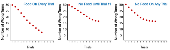 3 graphs depicting the three groups in Tolman's experiment: Group 1: food on every trial, Group 2: no food until trial 11, and Group 3: no food on any trial. This shows that group 1 continues to make fewer wrong turns with each additional trial, making only 8 wrong turns on trial 11. Group 2 makes 16 wrong turns on trial 11 and group 3 makes 16 wrong turns.