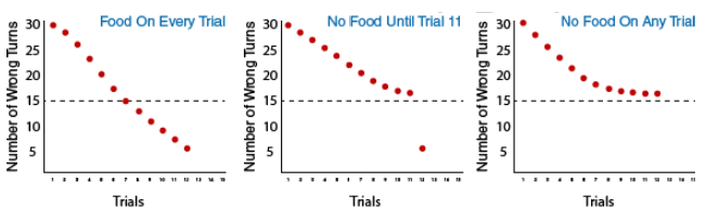 3 graphs depicting the three groups in Tolman's experiment: Group 1: food on every trial, Group 2: no food until trial 11, and Group 3: no food on any trial. Group 1 makes 5 wrong turns on trial 12, group two makes 5 wrong turns on trial 12, and group 3 makes 16 wrong turns on trial 12.