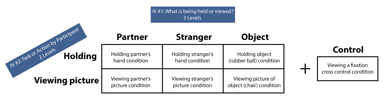 There are two independent variables and six conditions for this experiment. The girl either held the hand of her partner, of a stranger, or held an object (a rubber ball), or looked at a picture of her partner, a stranger, or an object (a chair). There was also a control condition in which the participant viewed a fixation for a cross control condition.
