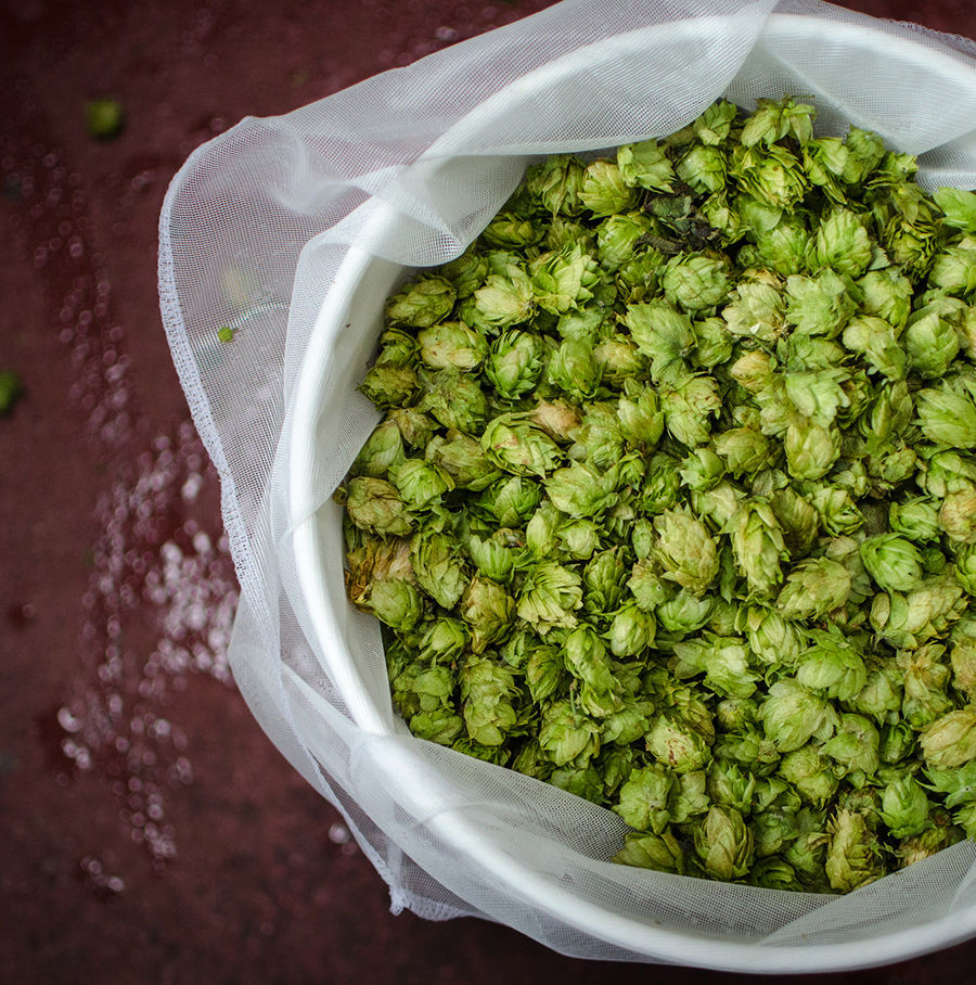 New York hops