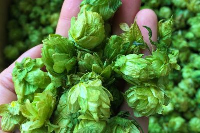 single-hop beers