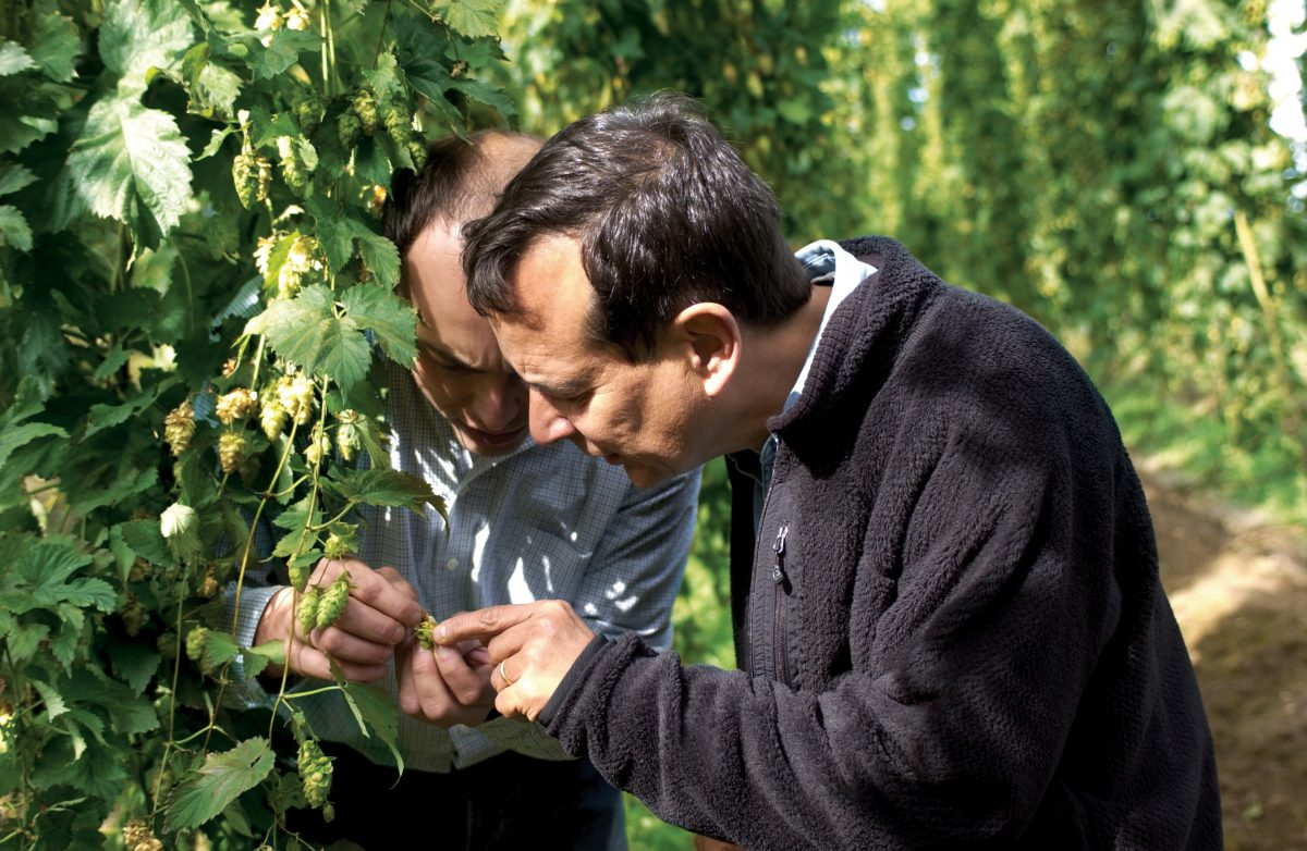Jim Koch looking inspecting hops