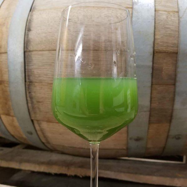 toledo algae beer