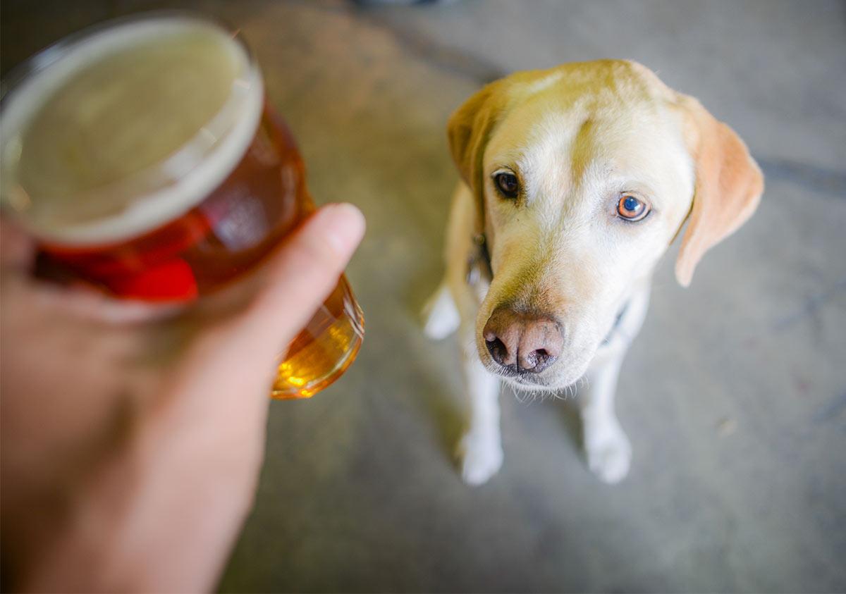 Brewery Dog