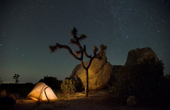 Tent by Joshua Tree in the night with stars