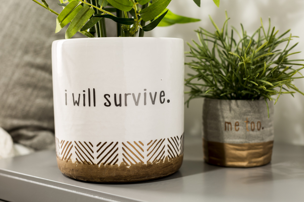 Snarky sayings on planters using Cricut vinyl