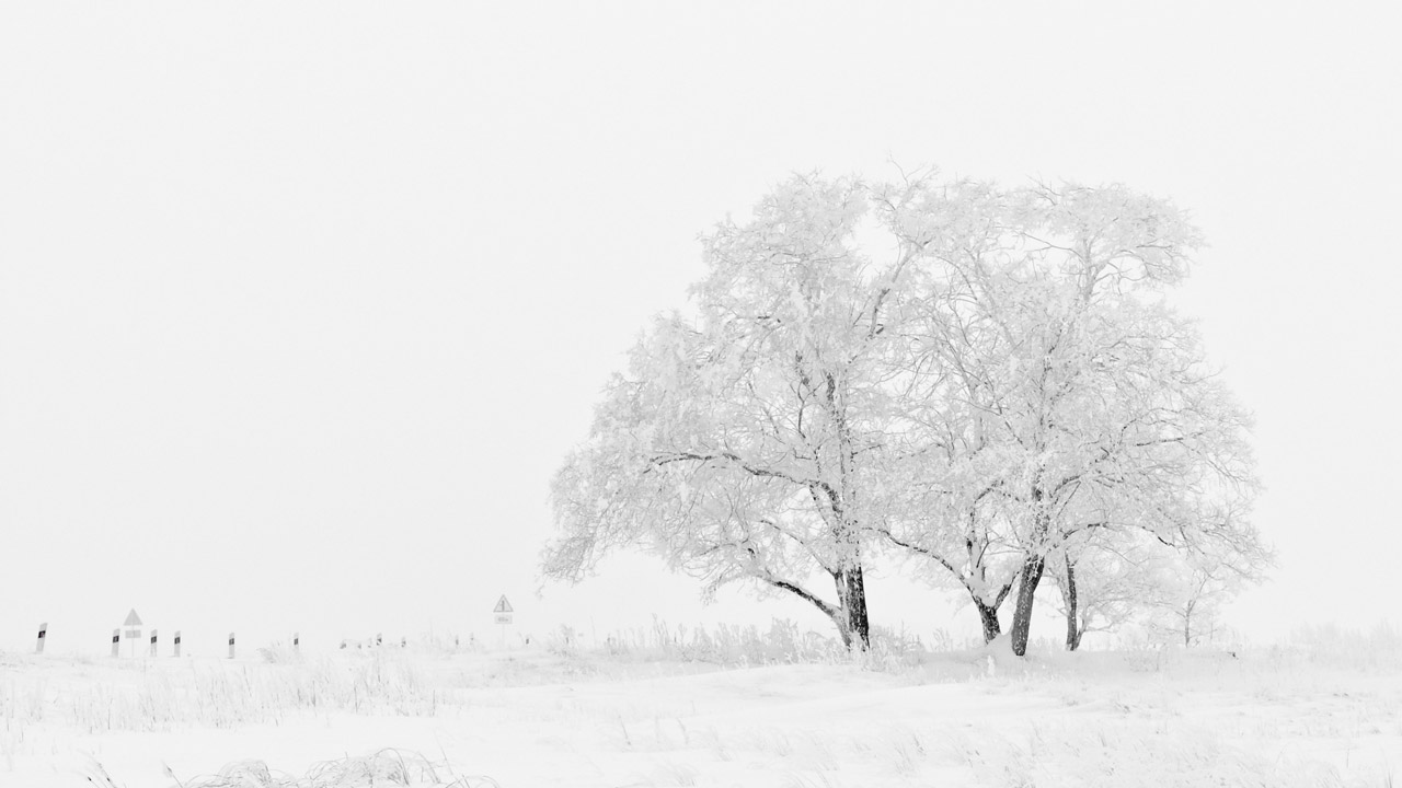 Snow covered trees in winter for Fitovers Winter Eye Health Blogpost