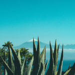 An agave and aloe plant sit in the foreground of a photo with mountains in the backdrop.