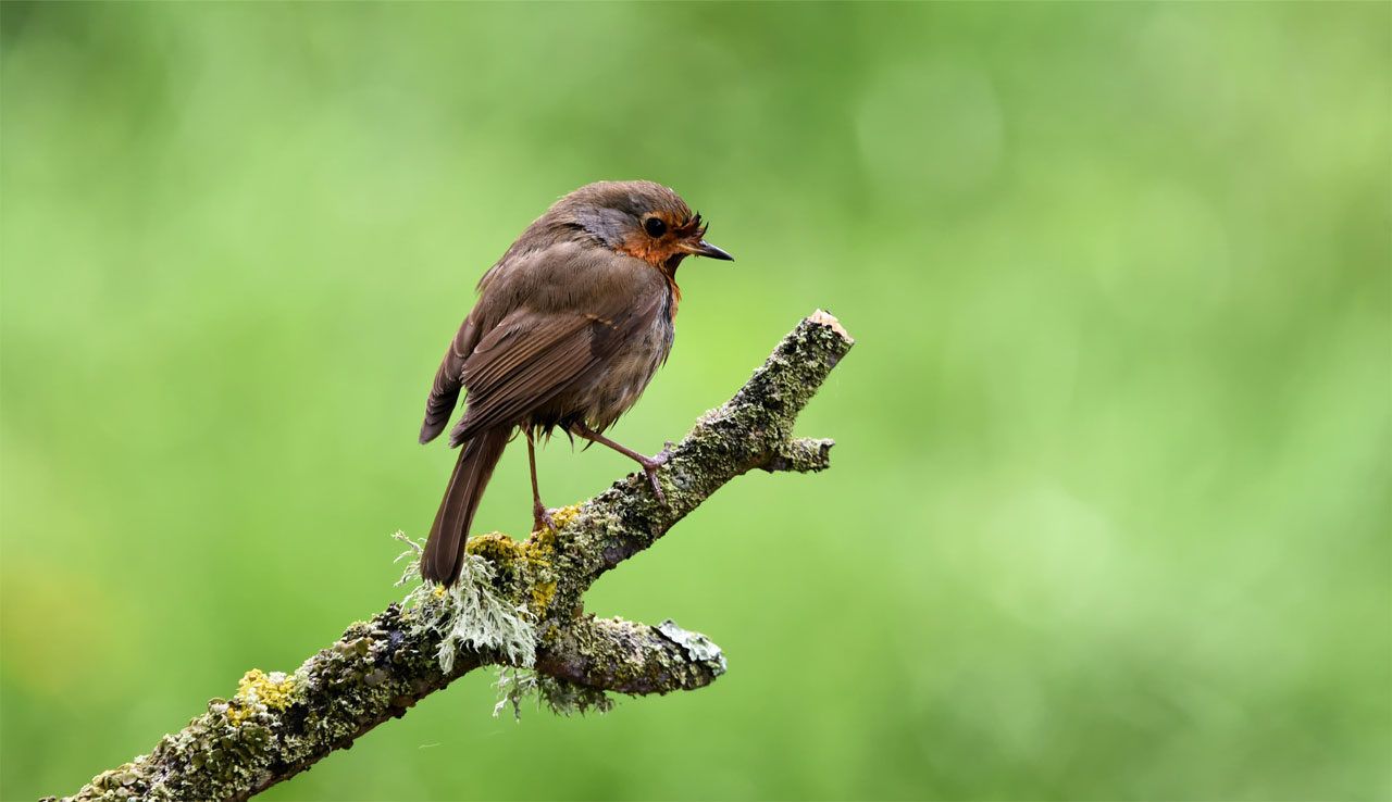 Bird sitting on branch