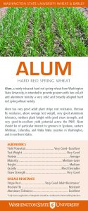 Alum, hard red spring wheat, flyer