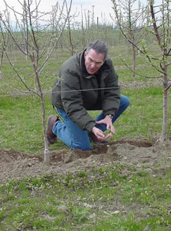 Dr. Reganold in an apple orchard.