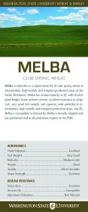 Melba, club spring wheat, flyer