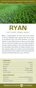Ryan, soft white spring wheat, flyer