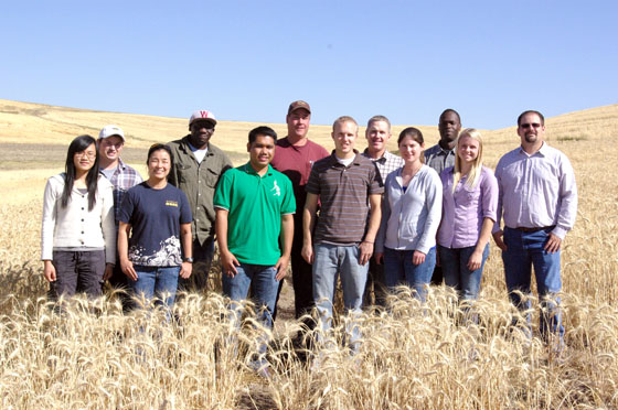 Spring Wheat Research Group 2011