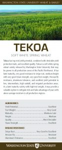 Tekoa, soft white spring wheat, flyer