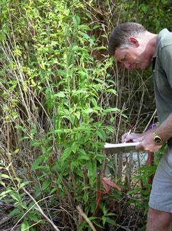 Tim Miller inspecting Butterfly Bush