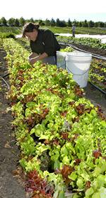 CSS Organic Farm