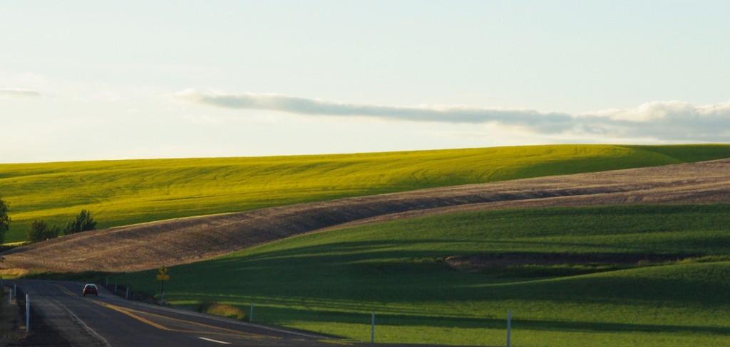 fields in the Palouse region