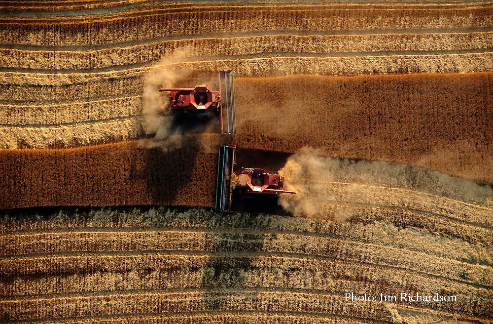 View from above of two combines harvesting in a field