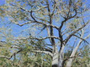 Matthew Cutter - Majestic Oak