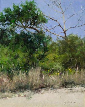 Matthew Cutter - Trees at Matanzas Inlet