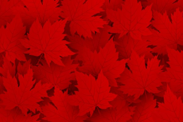 red maple leaf canada