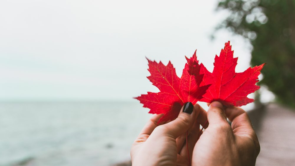 maple leaf Canadian beach background