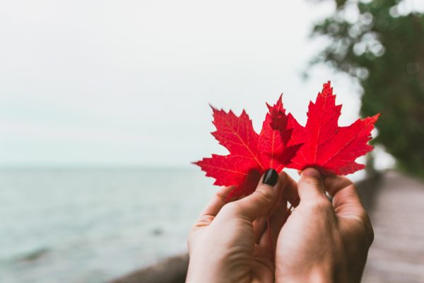 maple leaf Canadian beach background