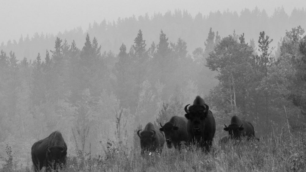 Yukon-Wildlife-Canadian-Immigration