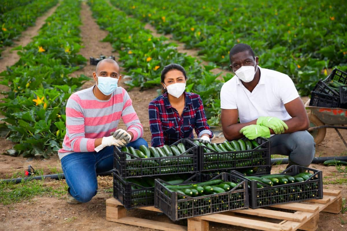 farm workers wearing masks with freshly picked vegetables on farm | move to Canada