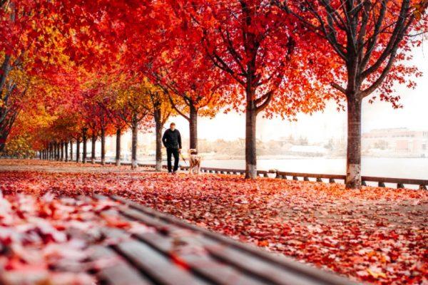 man_walking_dog_in_beautiful_park