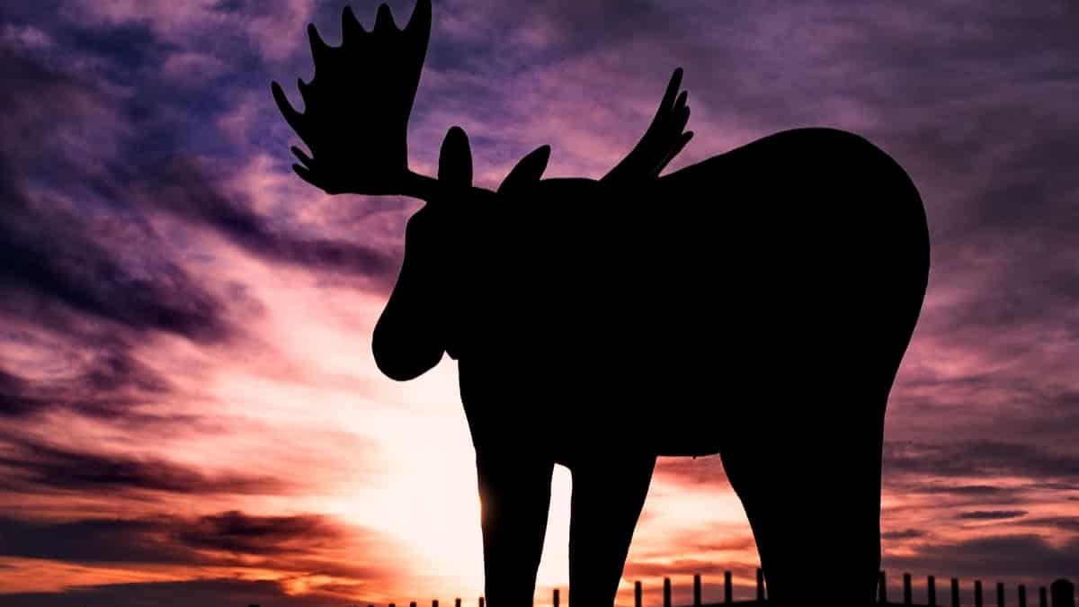 Mac-the-Moose-Moose-Jaw-Canada