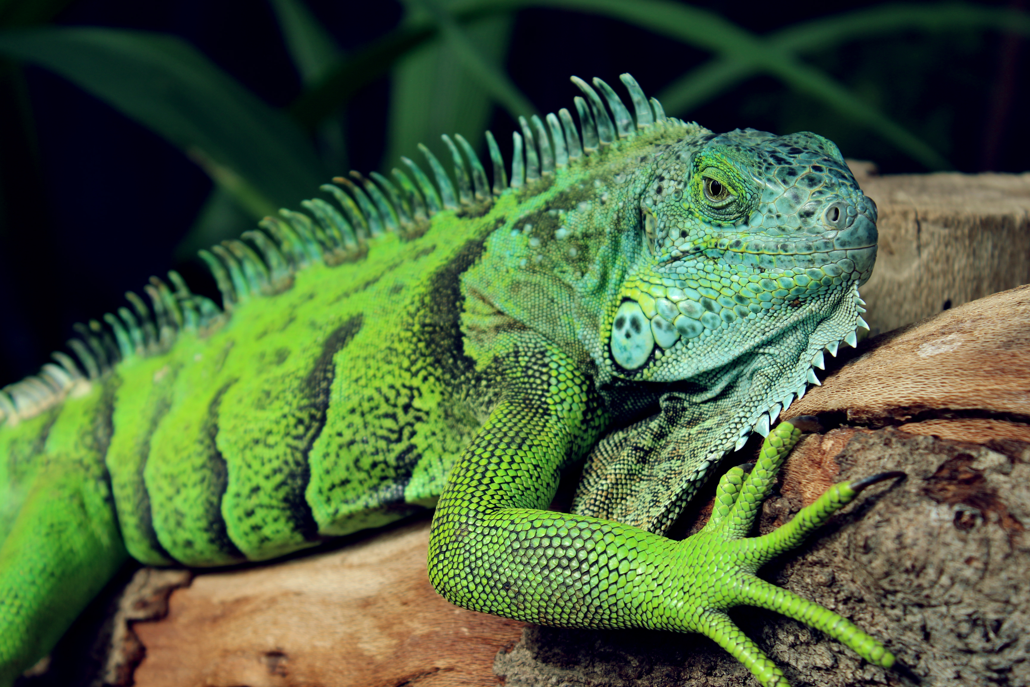 Lizard Squad hackers face cybercrime charges in Chicago - Cyberscoop