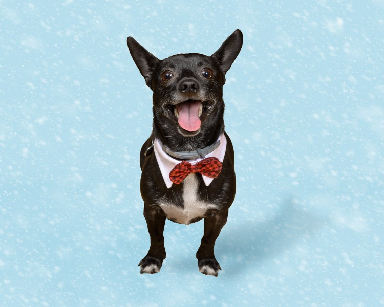 PetValu - Holiday Pet Photos