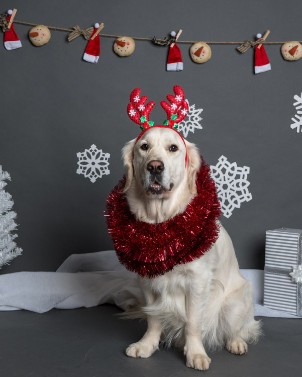 PetValu - Holiday Photos 2017