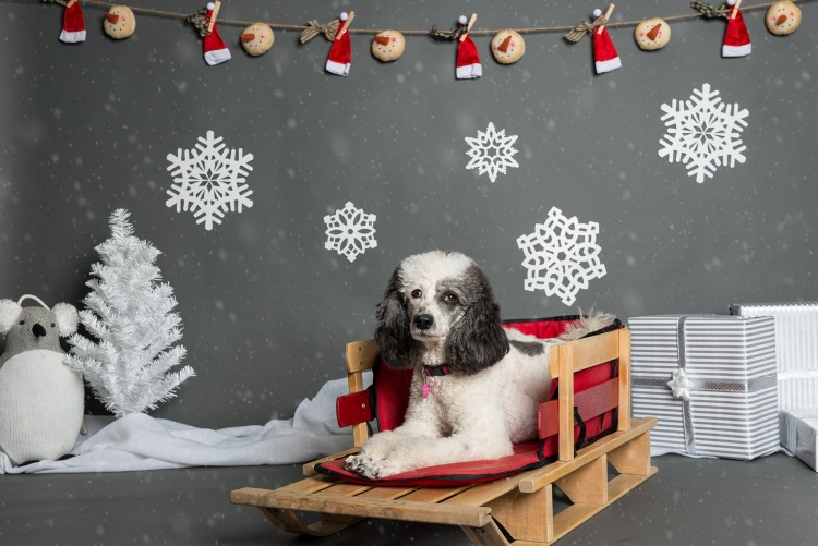 Paws with Manners - Holiday Pet Photos - 2017