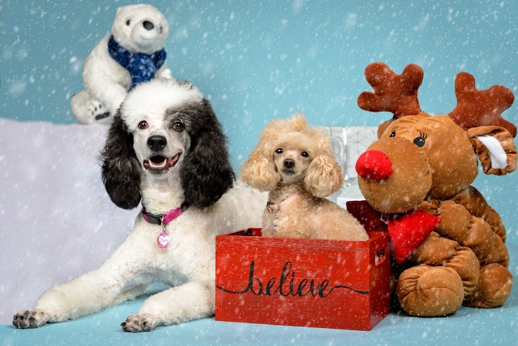 Paws with Manners - Holiday Pet Photos
