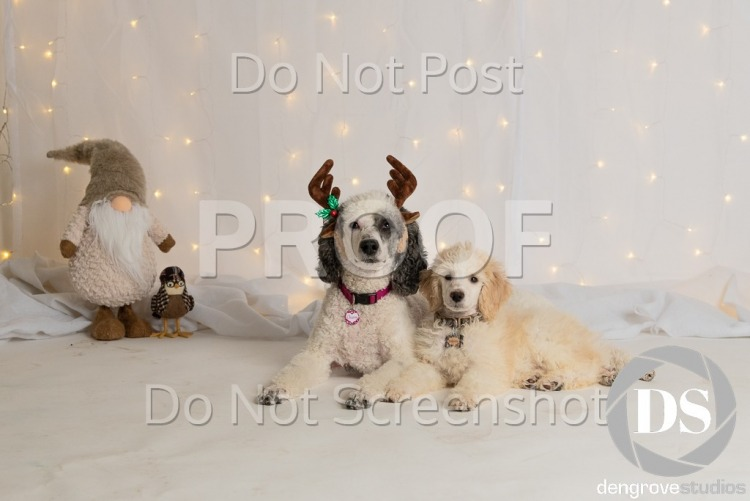 Paws with Manners - Holiday Pet Photos 2018