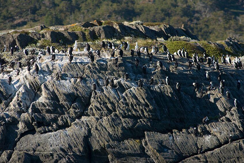 pared_cormoranes_patagonia