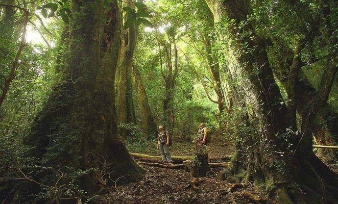 rsz_isla-mocha-bosque-chile