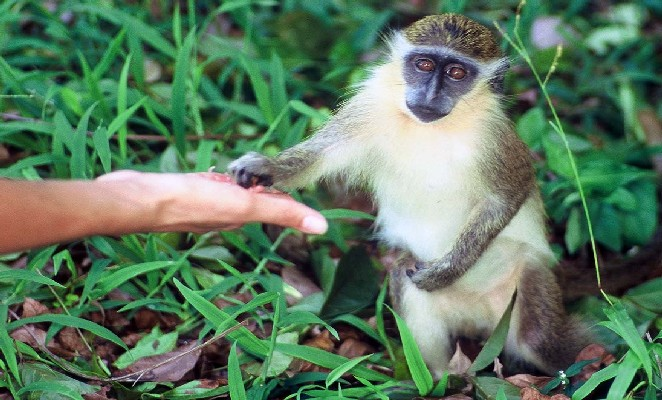 Persona alimentando a un mono
