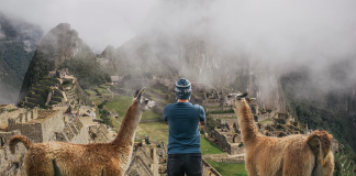 Viajero con dos llamas frente a machu picchu