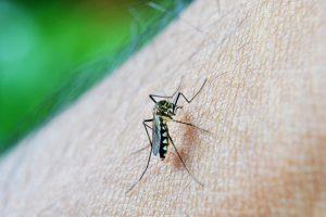 mosquito-213805_960_720