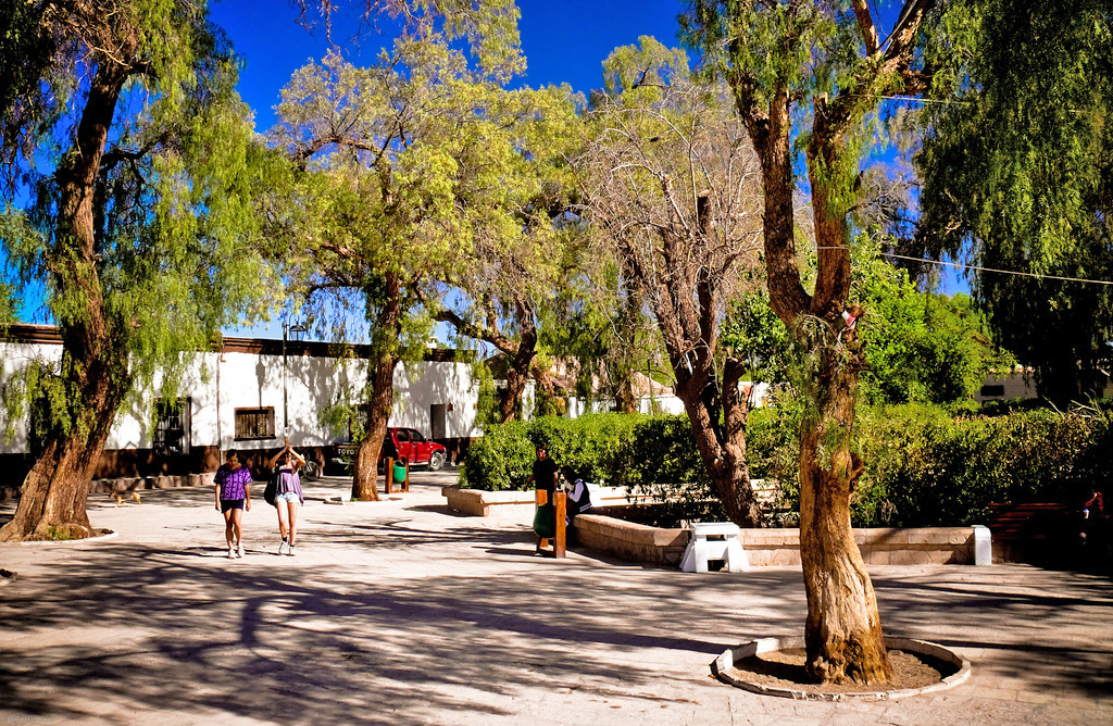 Plaza con arboles