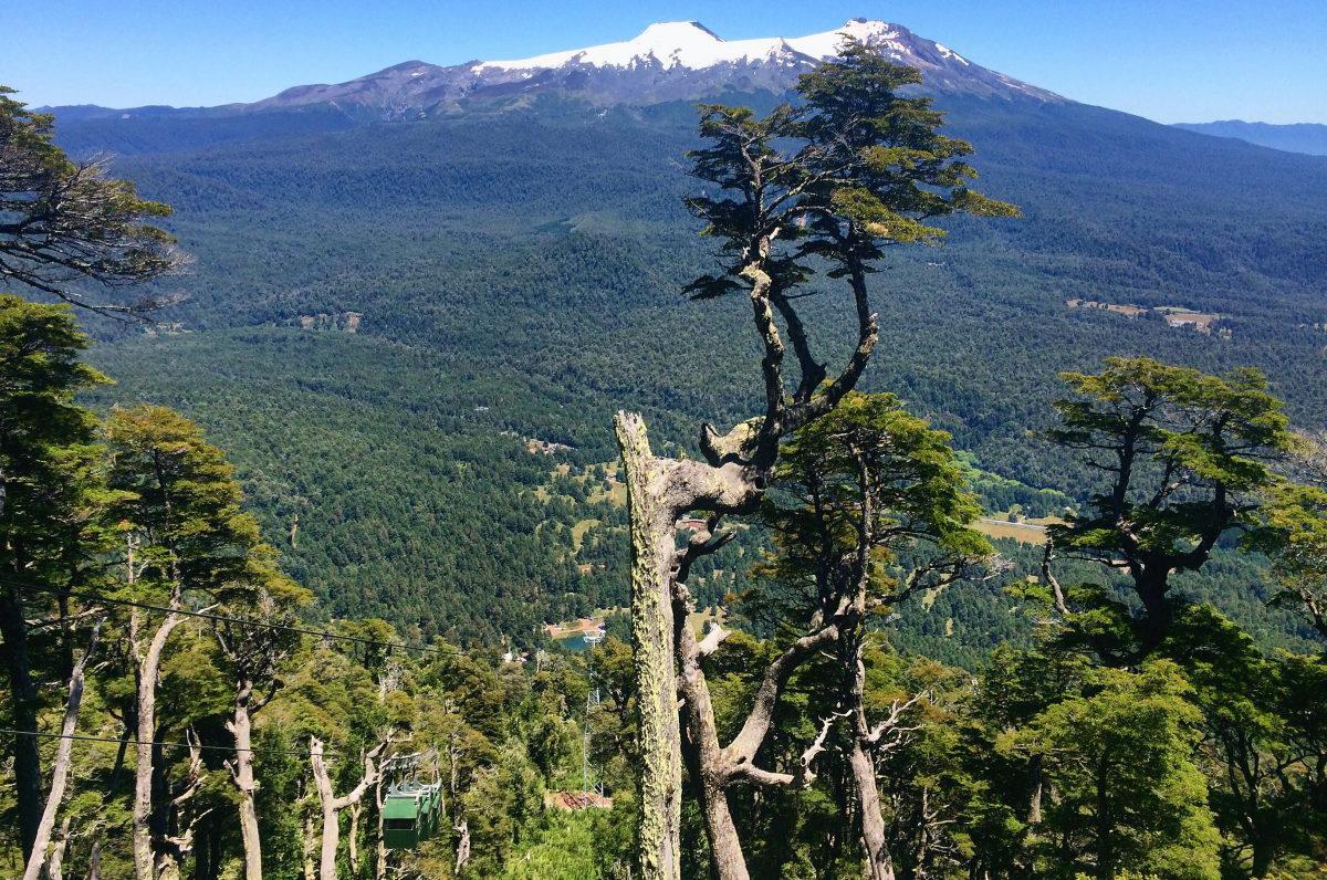 Vista al bosque y montaña desde la altura