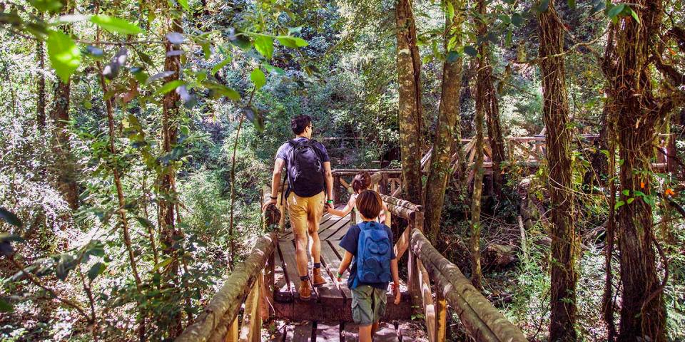 Familia caminando por sendero en el bosque