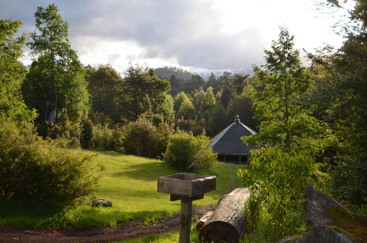 Bosque verde y quincho
